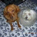 Kitty in Chelsea v pričakovanju kakšnega ukaza