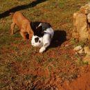 Kitty in kunec Gimzo na hribu pri hiši