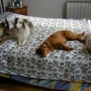 Kitty in Chelsea ter gosta s Primorske - Lucy in Al