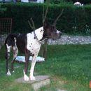 junij 2007-moj pesjak