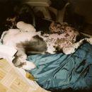 speči asterix - star 4 mesece