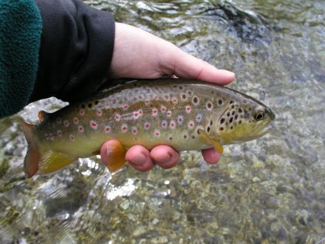 Fish1 - foto