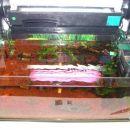 Iz akvarija sem odstranil umeten kamen in Anubijo barteri var. nano, ki ji je očitno bilo