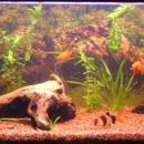 Akvarij je dobil nov izgled (brez flash-a)