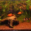 Akvarij je dobil nov izgled (z flash-em)
