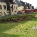 sončni log , (GAJj)   samo za ,izbrane!!!!    za lepšo travo pkliči  primorje , travca ,