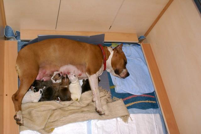 Mladicki - Puppies - foto