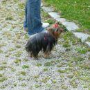 Lily je najbolj pri miru pozirala, zato je tudi na največ slikah. :)