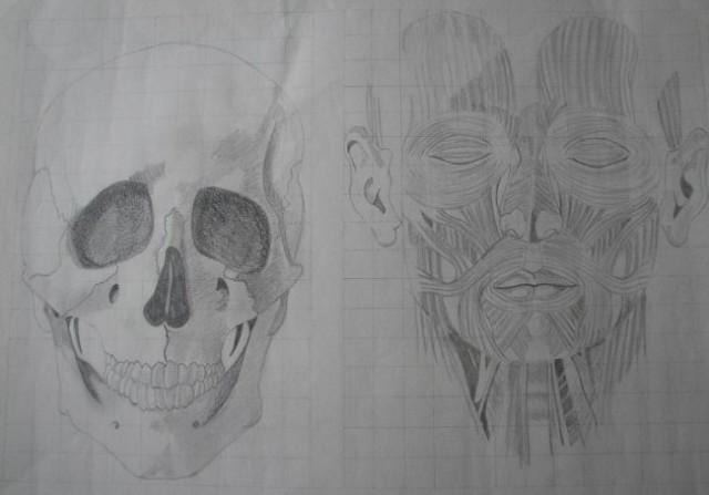 Študija glave