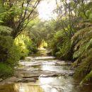 Rainforest - Blue mountains - Viktoria - AU