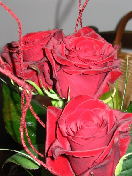 Žametne vrtnice... Canon Powershot A 75