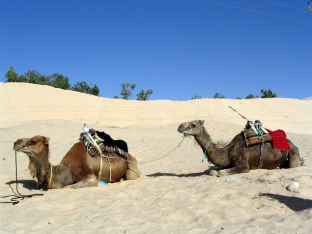 Tunizija - Tine in Tonka...   Canon Powershot A 75