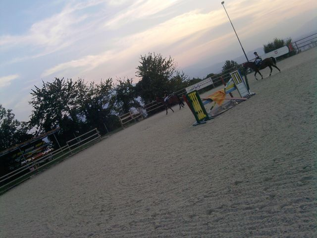 Šolski konji v