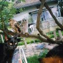 Kanja, lesna sovica ,muc ter pes Ari: oh kako prijetno je v senci , z dobro družbo!