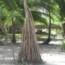 Tropsko rastlinje