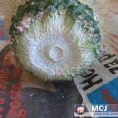 Ali je že dovolj suho?  Avtor: Leon56 rastline.mojforum.si