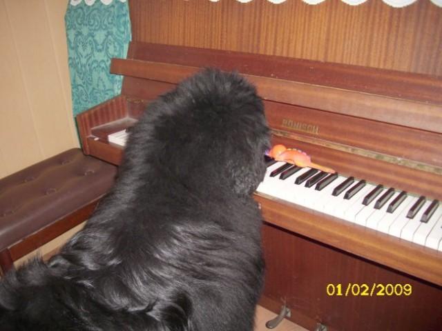 01.02.2009 zaigral vam bom eno pesmico
