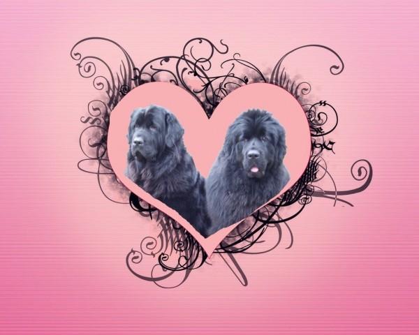 14.02.2009 valentinčka Sona in Carlos