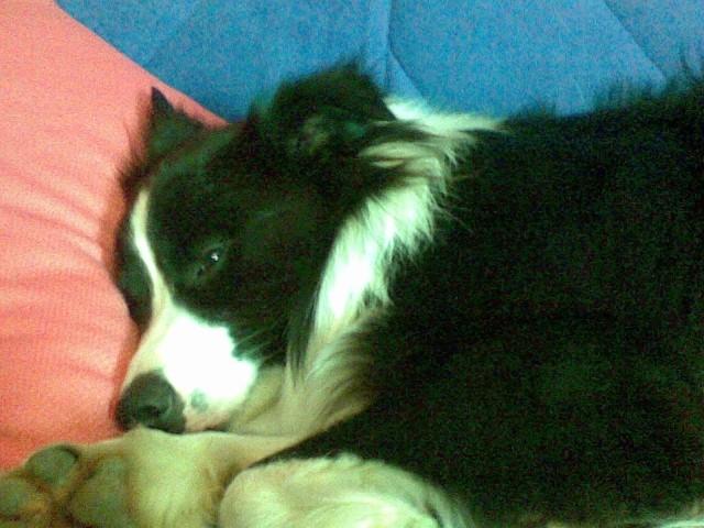 Spet spim pri janji....kako presenetljivo