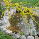 ribnik z zlatimi ribami in koi