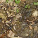 voda sjelina-ljepote moga kraja-19.07.2012