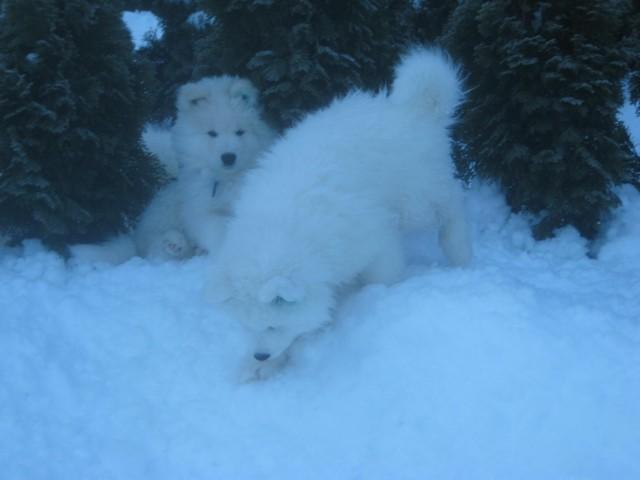 Kenzo in Kansas na snegu v Kr.Gori, dne 07.12.08