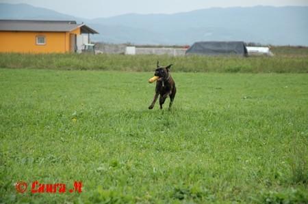 Bokserji DCG - 29.9.2008 - foto