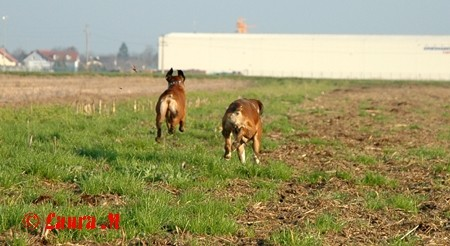 Diva in DCG prijatelji, 16.11.2008 - foto