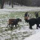 otočes - pasje srečanje