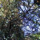 Vrt spominov in tovarištva na Petanjcih