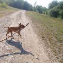 najsrečnejši pes na svetu...tnx gasho