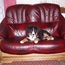 Že dva dni po prihodu v stanovanje sem si prilastila ta kavč.... in ga ne dam! HOV!!