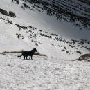 trd, pomrznjem sneg pod Sedlom
