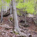 majhen greben na sredi grape v zgornjem delu