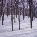 snežniški gozd