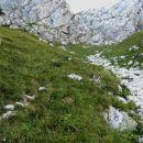 v zgornjem delu gre steza malo po travah in malo po grapi vse do Koglove stene, kjer se ob