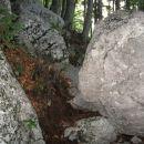 en luštkan prehod v gozdu, kjer mi nadaljujemo po udobni stezi navzgor - celotna pot ni (v