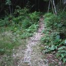 nato preide v stezico, ki se v ključih dviga skozi gozd - na desni strani imamo Mali Hudi