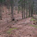 dolg greben Blatnika - več odcepov vodi levo