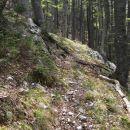 levo v gozd
