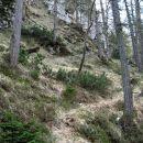 in se na nasprotni strani dviguje med travo in ruševjem
