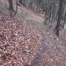 stezica se v lepih ključih vije navzgor skozi gozd na travnat greben