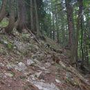 stezica se obrne desno v gozd
