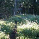 tam pa strmo levo v gozd - pot je vlažna in spolzka