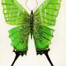 Slike-metulji