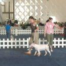 CACIB Portorož 2006 Buddy in Eva