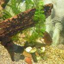 Diskus v 240L akvariju
