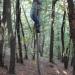 Kaj narediš če srečaš v gozdu medveda?