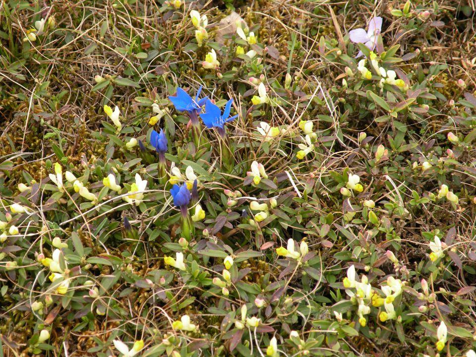 Petelinčki na Jelšah in slap Bojanca 6.4.2011 - foto povečava