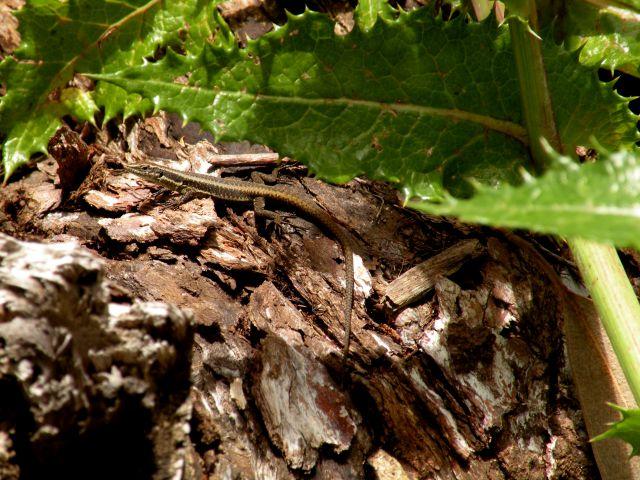16 madeira Encuemade 2 - foto